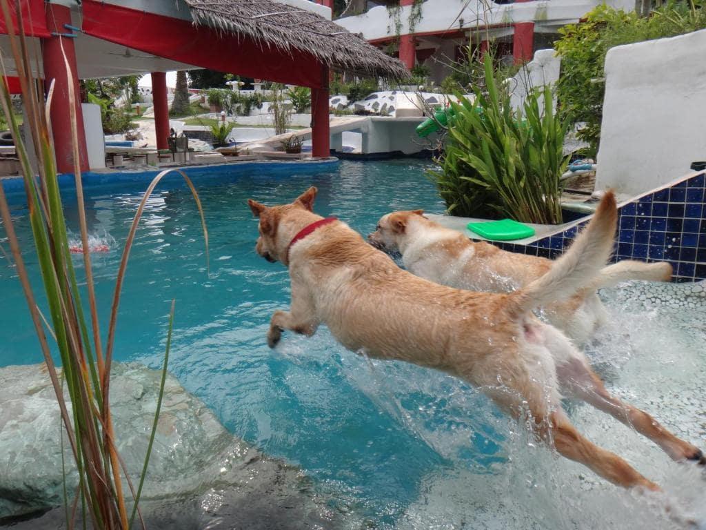 10 ที่พักพัทยาสุนัขเข้าพักได้ ใกล้ทะเล และที่เที่ยวมากมาย!